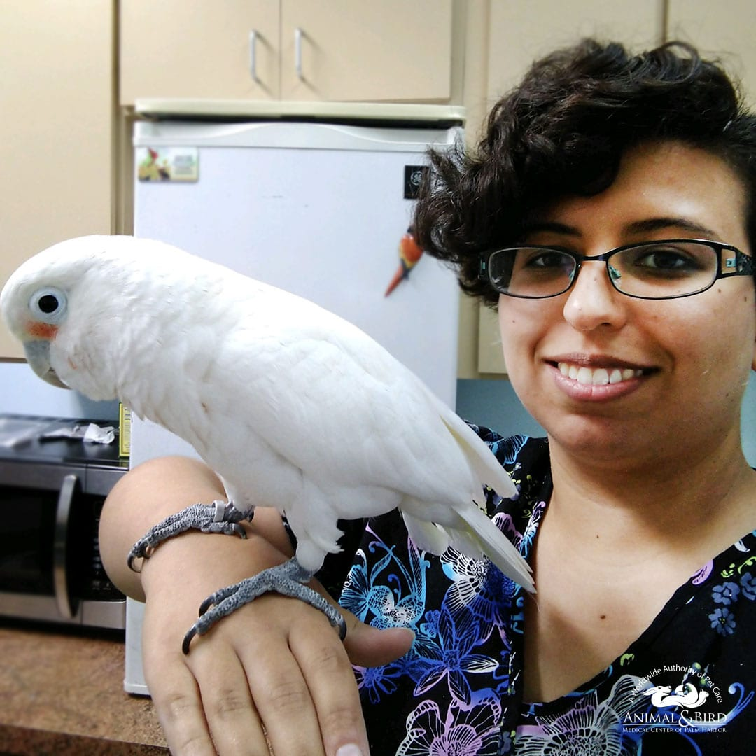 Nicole Luna - Staff - Animal and Bird Medical Center Vet Clinic of Palm Harbor
