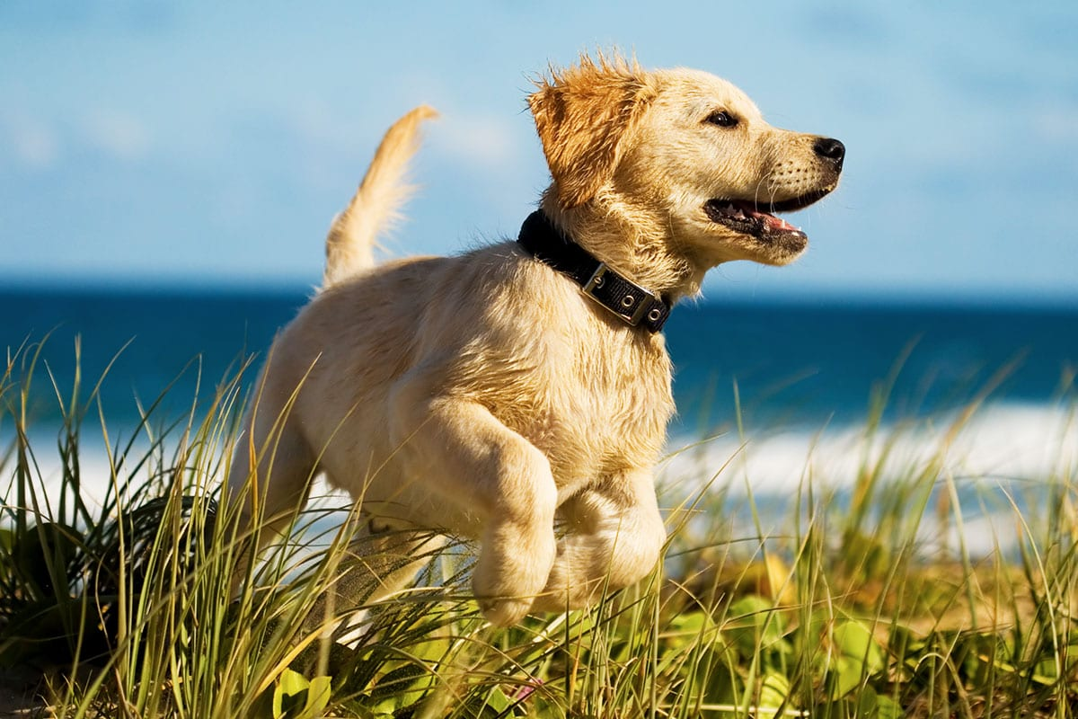 Quality Veterinary Care for your puppy in Palm Harbor, FL – Animal & Bird Medical Center vet clinic